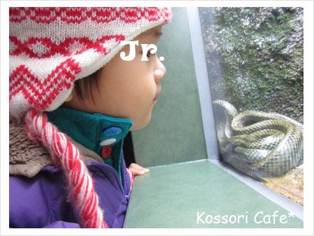 jr229.jpg