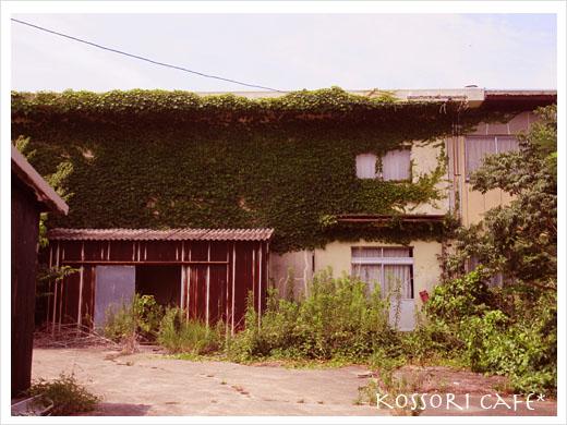 sakushima36.jpg